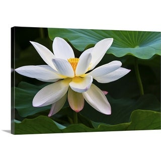 """White lotus flower"" Canvas Wall Art"