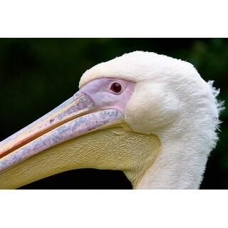 Pelican Bird Photograph Wall Art Canvas
