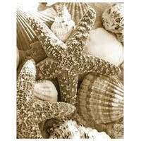 ''Starfish and Shells'' by Anon Coastal Art Print (14.5 x 11.5 in.)