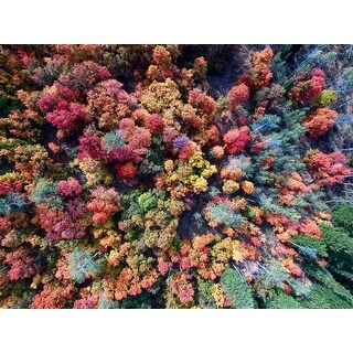 Forest Aerial Trees Photograph Wall Art Canvas