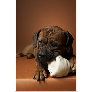 Shop Small breed of dog with short muzzled face  - Multi