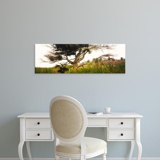 Easy Art Prints Panoramic Image 'Tree and plants in an Arboretum, Washington Park, Seattle, Washington ' Canvas Art
