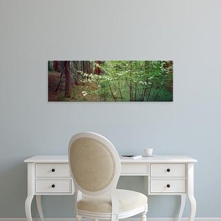 Easy Art Prints Panoramic Image 'Flowering dogwood in bloom at sunrise, Sequoia National Park, California' Canvas Art
