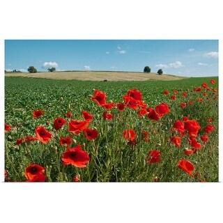 """Red poppy field under blue sky"" Poster Print"