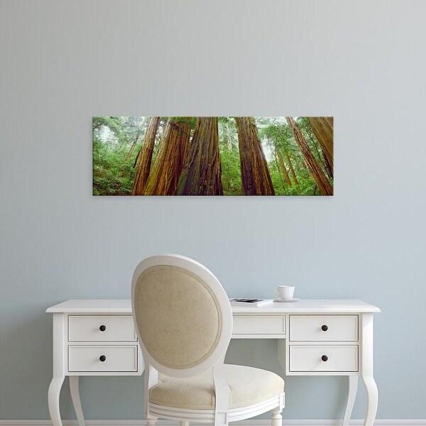 Easy Art Prints Panoramic Images's 'Redwood trees, Muir Woods National Monument, California, USA' Premium Canvas Art