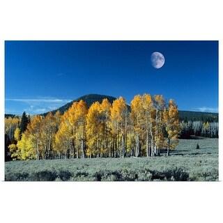"""Autumn cedar trees"" Poster Print"