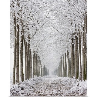 """""""Two rows of frozen trees."""" Poster Print"""