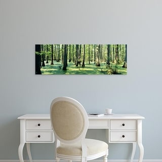 Easy Art Prints Panoramic Images's 'Cypress trees in a forest, Shawnee National Forest, Illinois, USA' Canvas Art