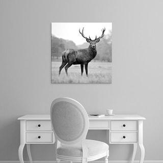 Easy Art Prints PhotoINC Studio's 'Proud Deer' Premium Canvas Art