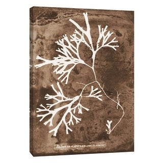 """PTM Images 9-105808  PTM Canvas Collection 10"""" x 8"""" - """"Natural Forms Sepia 8"""" Giclee Seaweed Art Print on Canvas"""