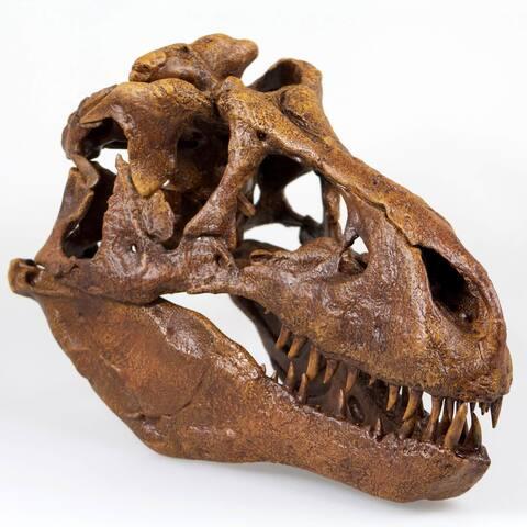 T-Rex Skull Quarter Scale Smithsonian Fossil Replica - 11 Inches - Multi