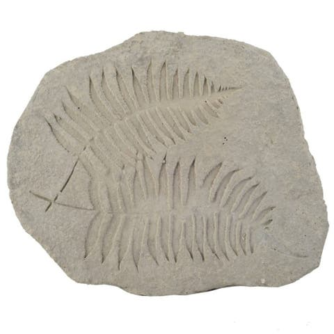 """15"""" Cement Gray Contemporary Style Fern Fossil Accent"""