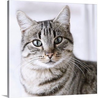 """Tabby gray cat and green eyes."" Canvas Wall Art"