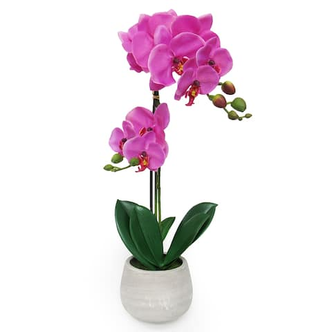 Phalaenopsis Orchid Flower Arrangement in Clay Pot 20in