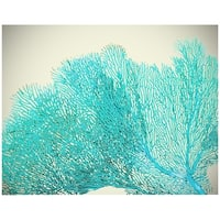 ''Teal Coral'' by Anon Photography Art Print (22.5 x 28.5 in.)