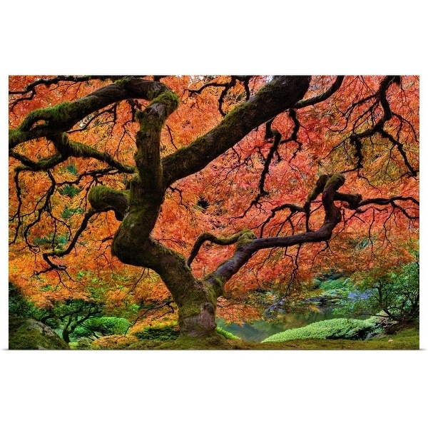 """""""Maple tree at portland Japanese garden in fall"""" Poster Print"""