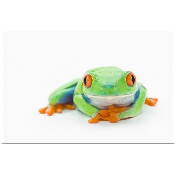 """Red-Eyed Tree Frog (Agalychnis Callidryas)"" Poster Print"
