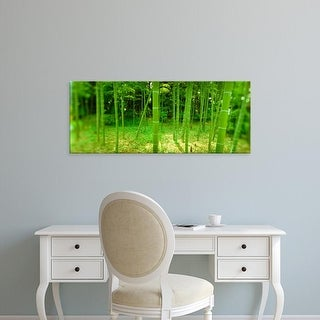 Easy Art Prints Panoramic Image 'Bamboo trees in a park, Tokyo Prefecture, Kanto Region, Honshu, Japan' Canvas Art