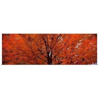"""Maple tree in autumn, Vermont,"" Poster Print"