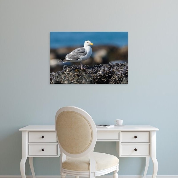 Easy Art Prints Rick A Brown's 'Western Gull' Premium Canvas Art