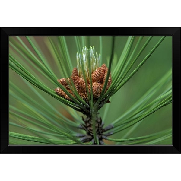 """Close-up of Senita Organ Pipe cactus, Cereus schotii, Arizona, USA"" Black Framed Print"