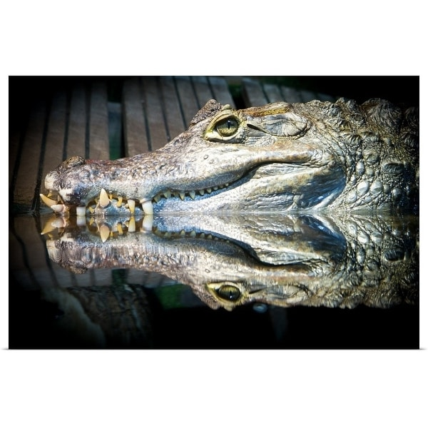"""""""Reflection of a crocodile in water"""" Poster Print"""