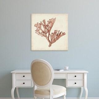 Easy Art Prints Naomi McCavitt's 'Seaweed Specimens XIII' Premium Canvas Art