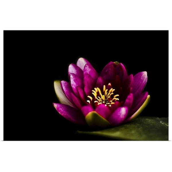 """Closeup capture of pink water lily on pond."" Poster Print"