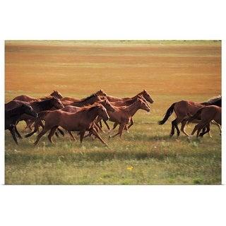 """Wild horses running near Fairplay, Colorado"" Poster Print"