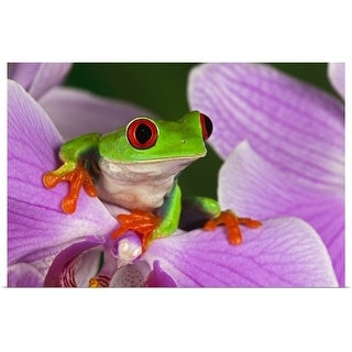 """""""Red-eyed tree frog on flower"""" Poster Print"""