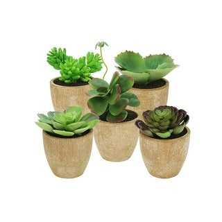 Set of 5 Southwestern Mixed Green Succulent Plants in Terracotta Pots 7.5""