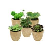 "Set of 5 Southwestern Mixed Green Succulent Plants in Terracotta Pots 7.5"""