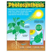 Chart Photosynthesis Gr 4-8