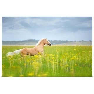"""""""Horse running in field."""" Poster Print"""