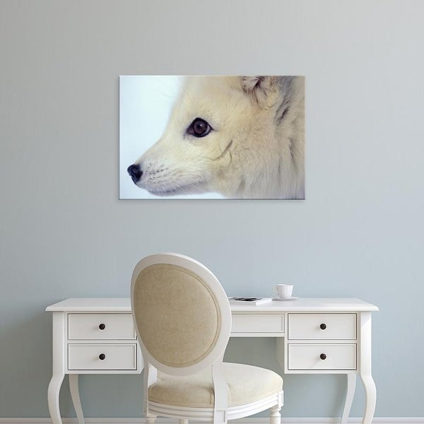 Easy Art Prints Steve Kazlowski's 'Arctic Fox' Premium Canvas Art