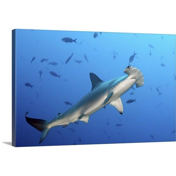 """Hammerhead shark"" Canvas Wall Art"