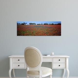 Easy Art Prints Panoramic Images's 'Indian Paintbrush & Bluebonnets TX' Premium Canvas Art