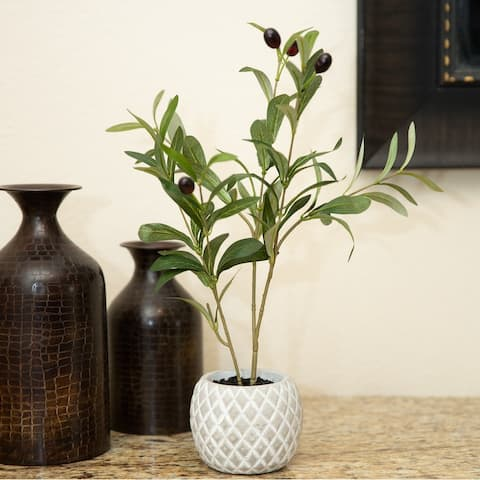 "14"" Olive Branch in 4""W Ceramic Pot - ONE-SIZE"
