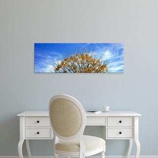 Easy Art Prints Panoramic Image 'Tree in autumn against a cirrus cloud in the sky, Temecula, California' Canvas Art