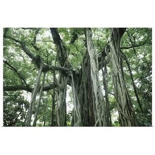 """Banyan Tree"" Poster Print"