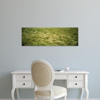 Easy Art Prints Panoramic Images's 'High angle view of a wheat field, Eisenberg, Germany' Premium Canvas Art