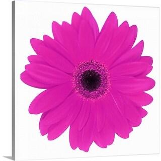 """Pink daisy"" Canvas Wall Art"