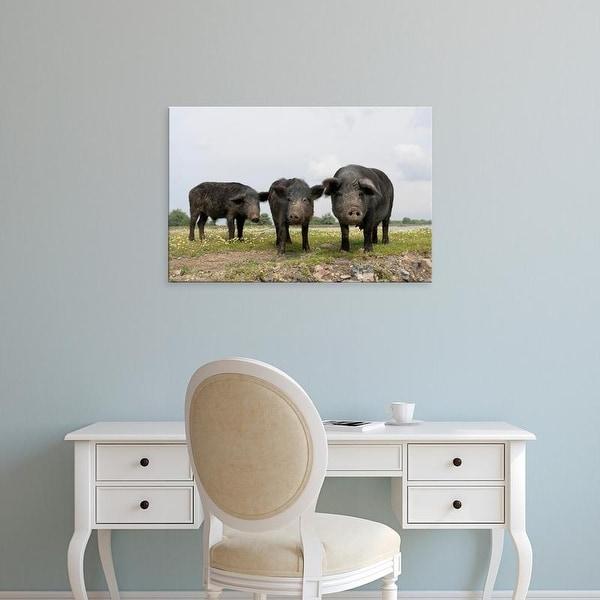 Easy Art Prints Martin Zwick's 'Domestic Pigs' Premium Canvas Art