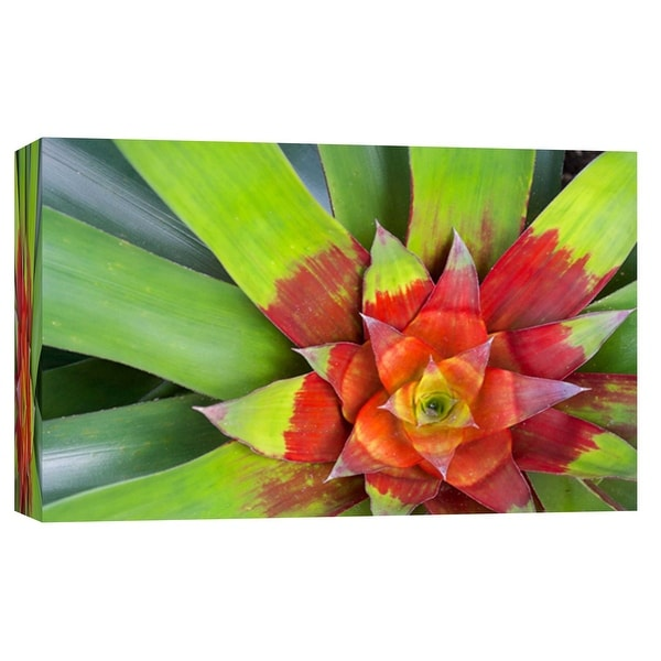 "PTM Images 9-103740 PTM Canvas Collection 8"" x 10"" - ""Neoregelia"" Giclee Tropical Art Print on Canvas"
