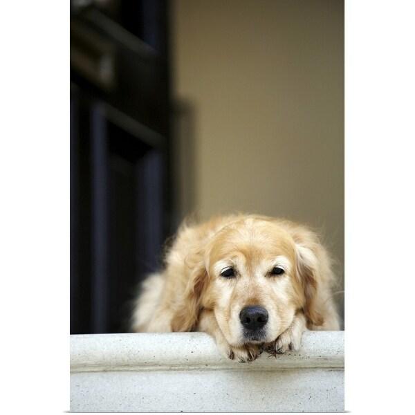 """""""Golden retriever dog lying in front door of house"""" Poster Print"""