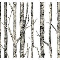 York Wallcoverings LL4758 Urban The Birches Wallpaper - White - N/A