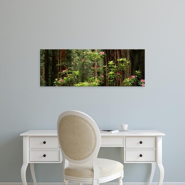 Easy Art Prints Panoramic Image 'Redwood trees, pink flowers in forest, Redwood National Park, California' Canvas Art