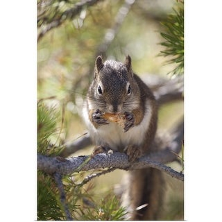 """Squirrel eating a pine cone."" Poster Print"