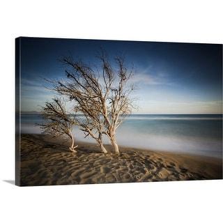 """Dead pine trees on beach"" Canvas Wall Art"