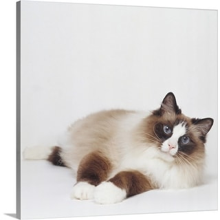 """Reclining Cat"" Canvas Wall Art"